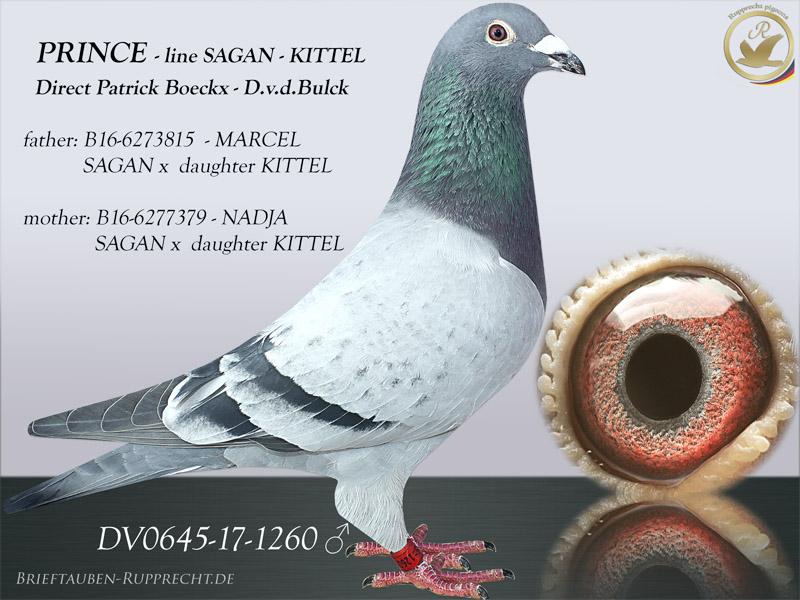 Patrick Boeckx - Dirk van den Bulck - KITTEL - SAGAN - GODE RODE - BROER GOEDE