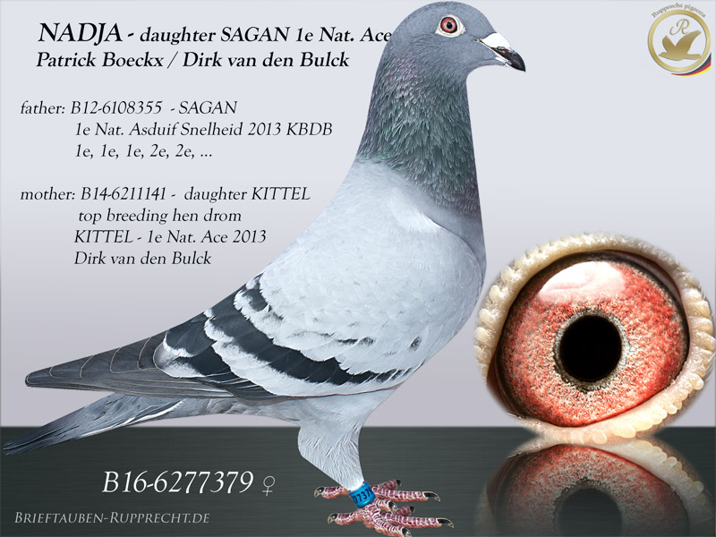 Patrick Boeckx - Dirk van den Bulck - KITTEL - SAGAN